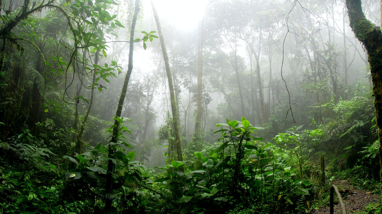 Brazilian troops sent to Amazon to fight deforestation